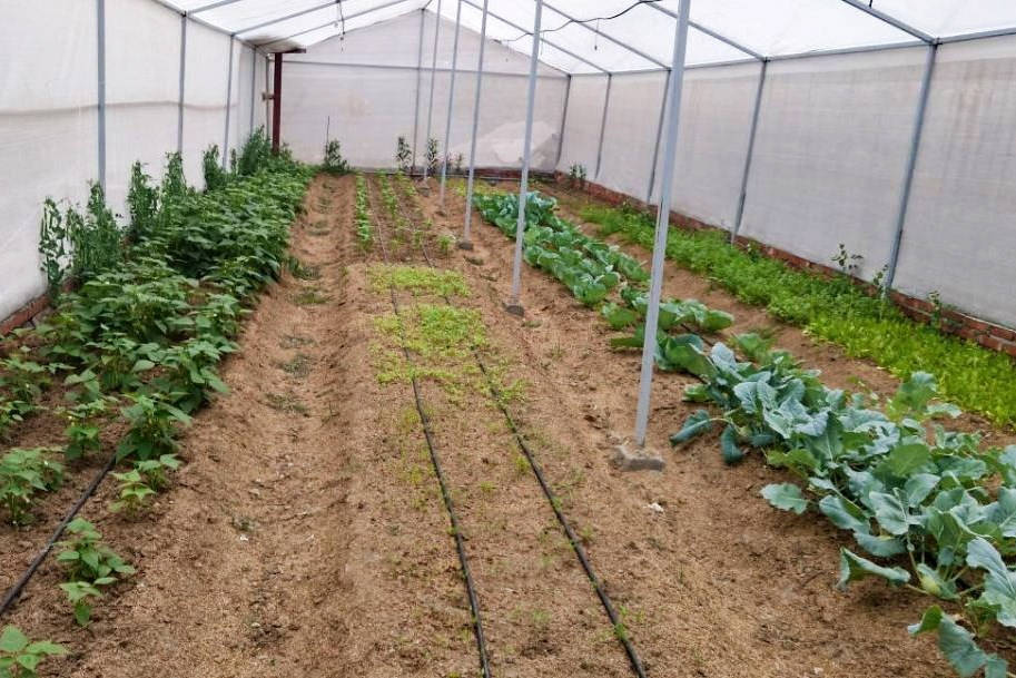 Closest to Nature - Organic Farm - Veda5 Ayurveda and Yoga Retreat in Himalayas Rishikesh India